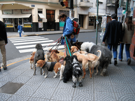 side business ideas dog walker