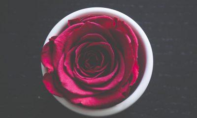 Valentine's Day Quotes Celebrating True Love in 2019