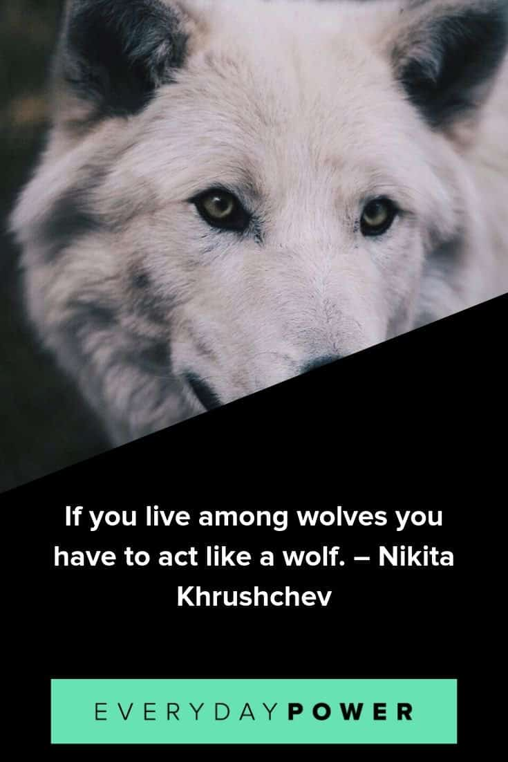 Wolf quotes to help you connect with you instincts and intuition