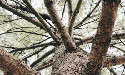 Tree Quotes Will Make You Want To Plant Roots