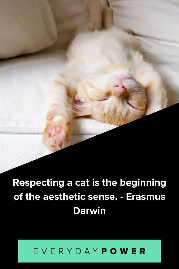 cat quotes that are too perfect for words
