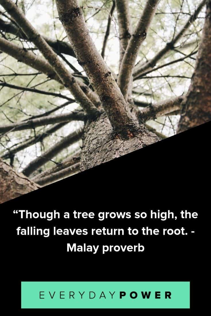 tree quotes to inspire and teach