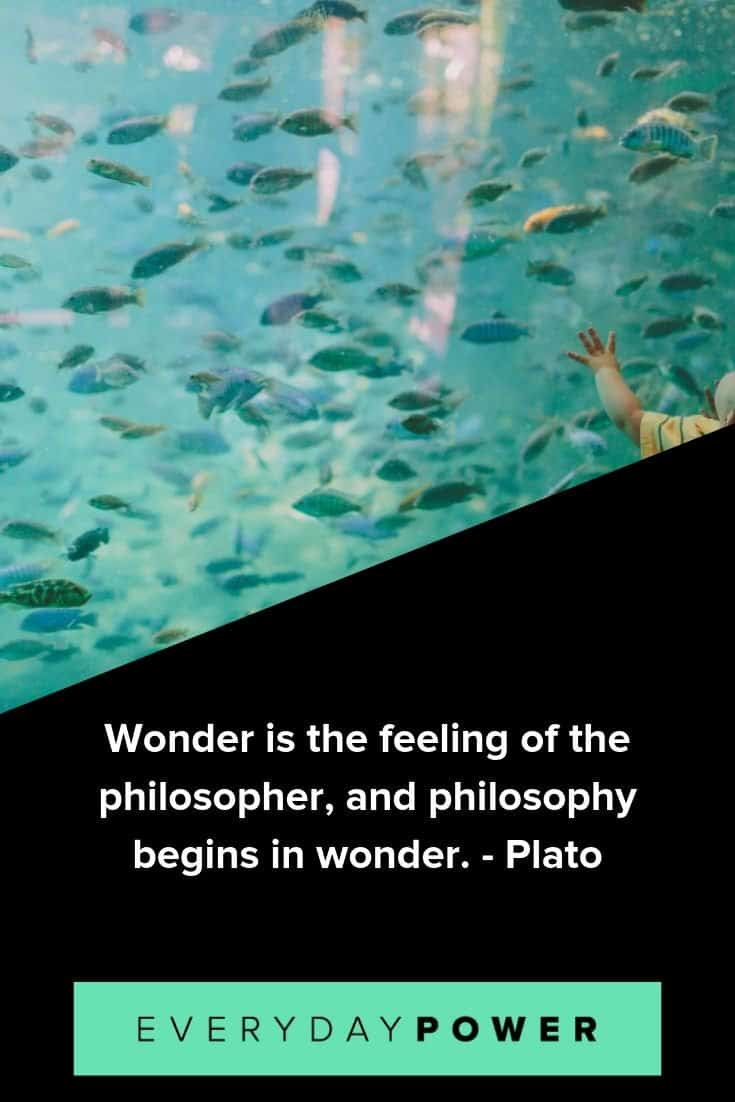 Wonder quotes that will make you feel alive