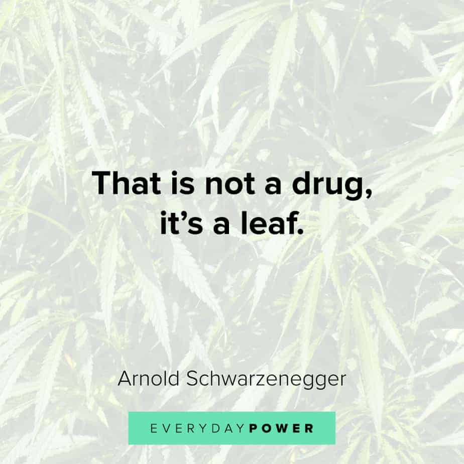 Weed Quotes about leaves