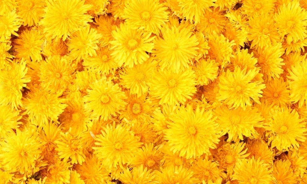 50 Yellow Quotes For A Happy Aesthetic Everyday Power