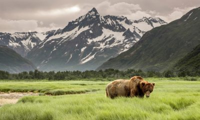 40 Bear Quotes that Honor the Animal